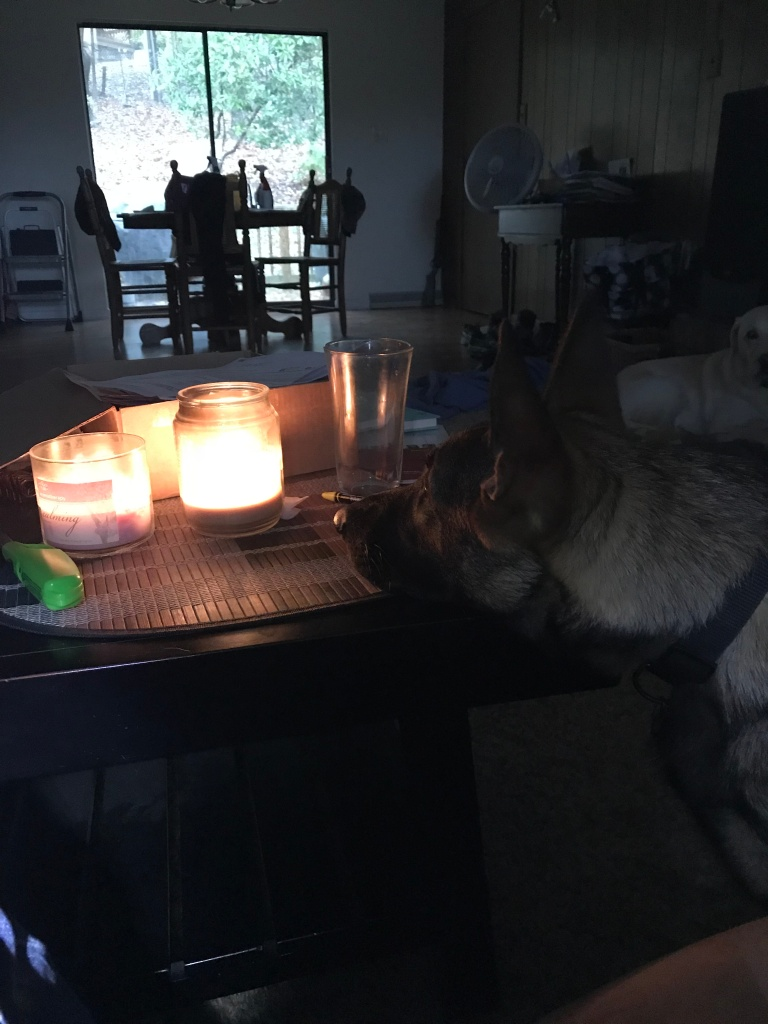 Puppy and Candle